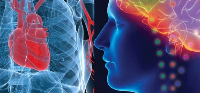 Medical research for heart and brain